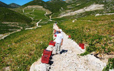 Peljesac wine region
